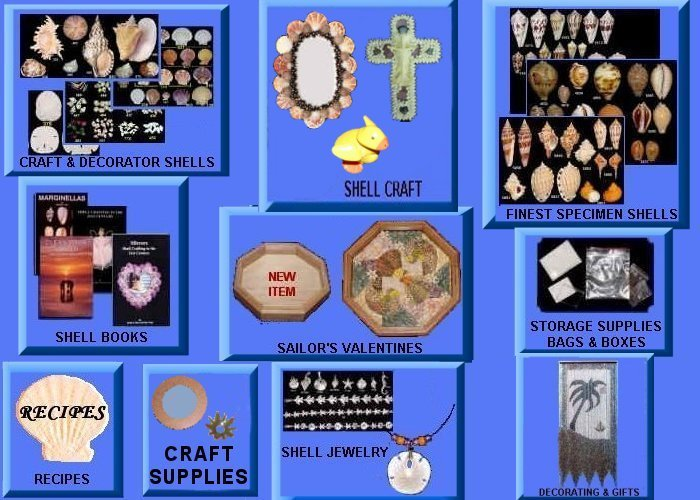 The Shell Store picture links for such departments as specimen shells, craft shells, craft ideas, books, storage supplies and gifts.